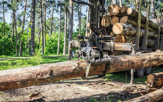 Illegal cutting of trees leading to more air pollution.