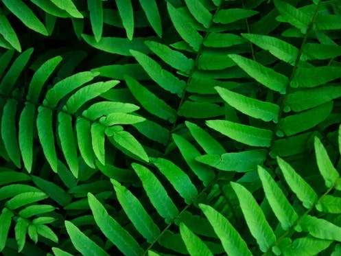 Automatic Plant Watrerotron