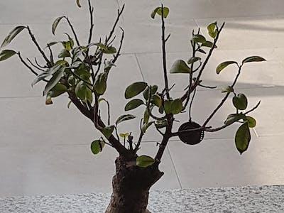 Bonsai monitor