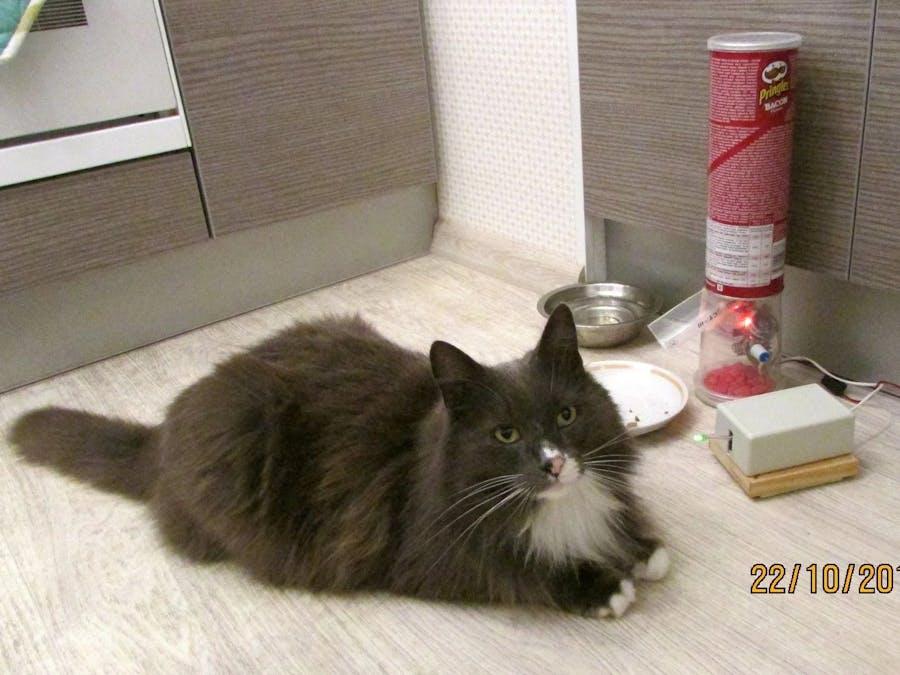 Self-service cat feeder