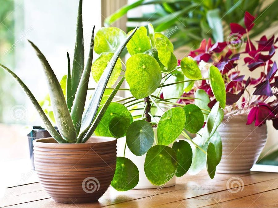 Simple Smart Plant System