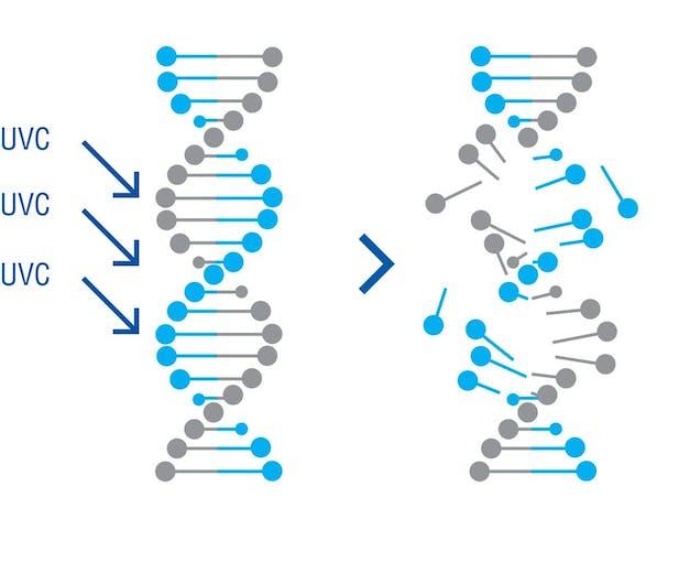 UVC on DNA of virus