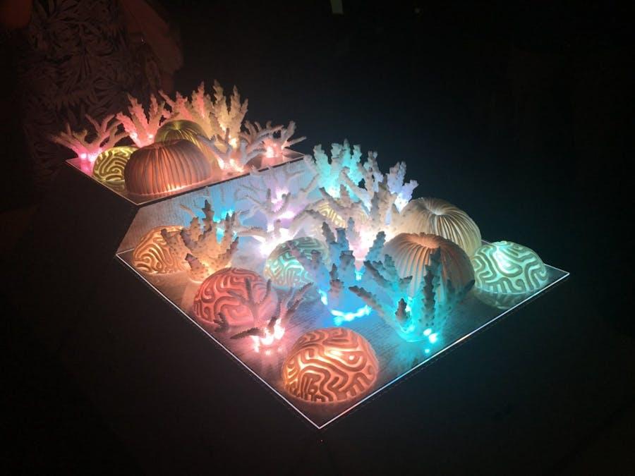 Rainbow Coral - Interactive Art