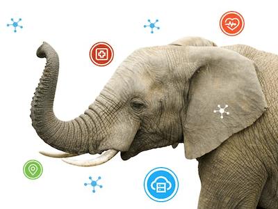 Elephant Activity Dashboard
