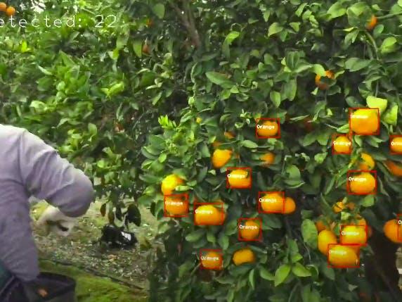 Fruit Detection Using MPSoCs