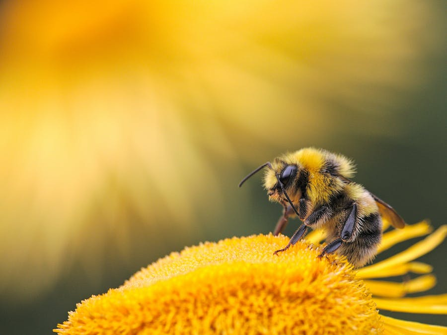 Bee: The Ultimate Medical Solution