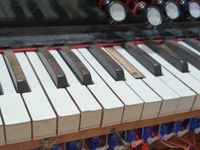 Latae Organi