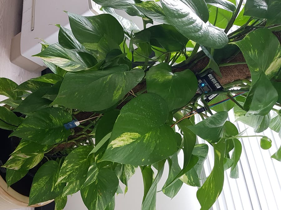 How to monitor a plant