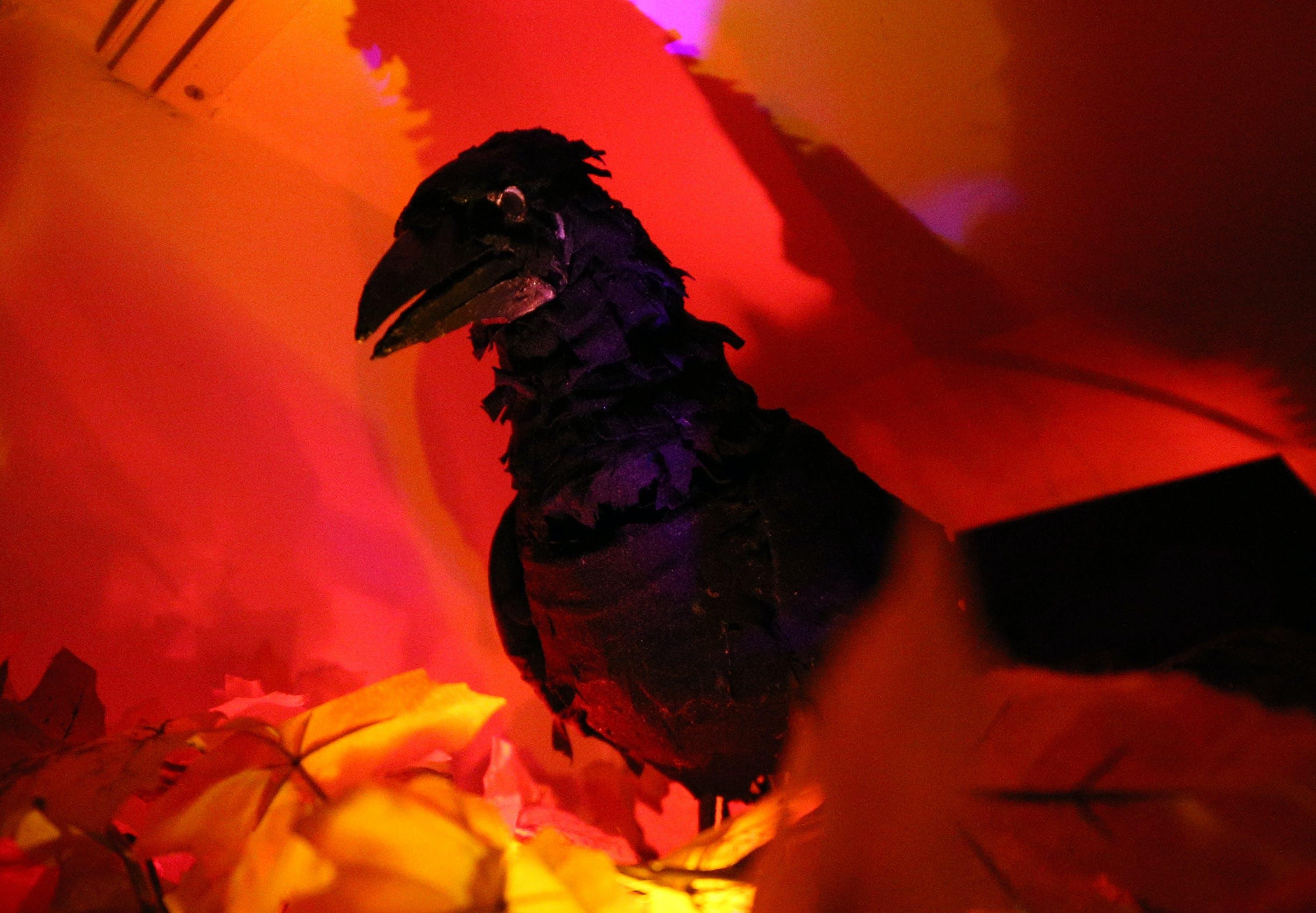 Talking Raven - Animatronic for Halloween