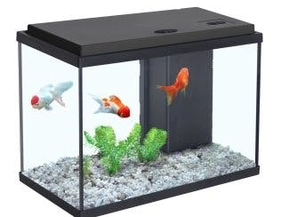 IOT for live control for Aquarium and Using DRS to orders