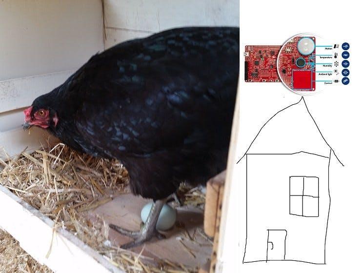chicken house surveillant