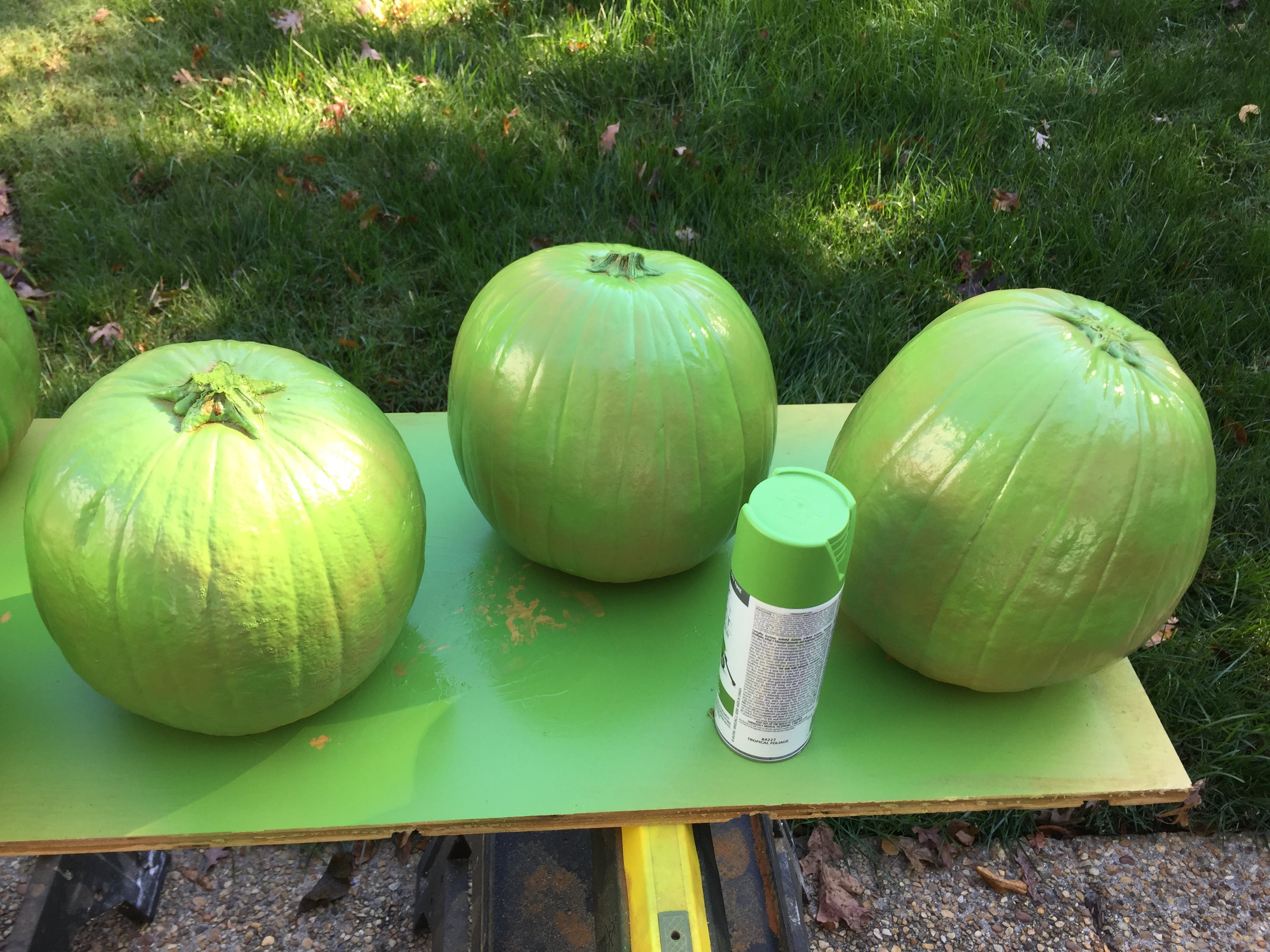 Pumpkins spray painted green for pigs