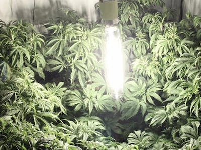Grow room / and Herb drying/curing room monitor