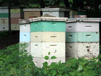 Bee hive remote monitor