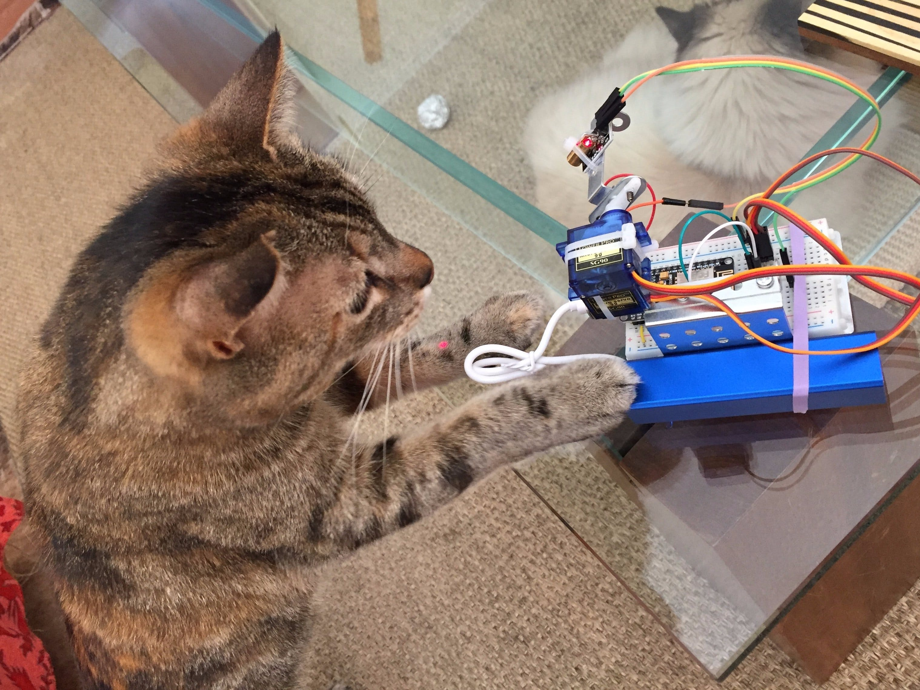 LaserCat - IoT With NodeMCU and Blynk
