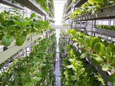Vertical Farming Machine