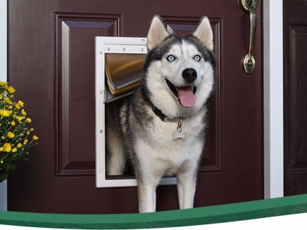 Doggy Door Security and Pet Tracker
