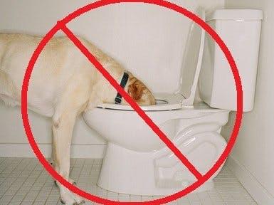 Toilet Water Protector
