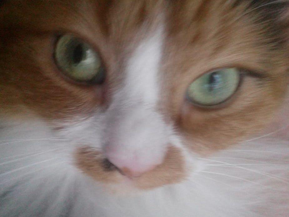 Cat Caddie