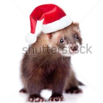 Stock photo ferret in red christmas hat looking at camera isolated on white background 339604805