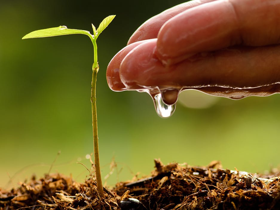 Adaptive Irrigation Control
