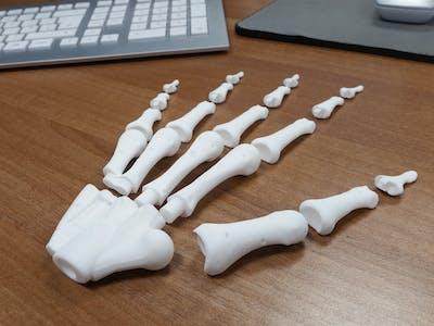 Bio-Mechanical Anatomical Hand Kinematics