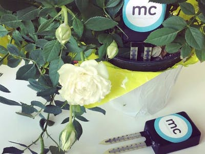Wireless IoT Soil Moisture Sensor Using mcThings!