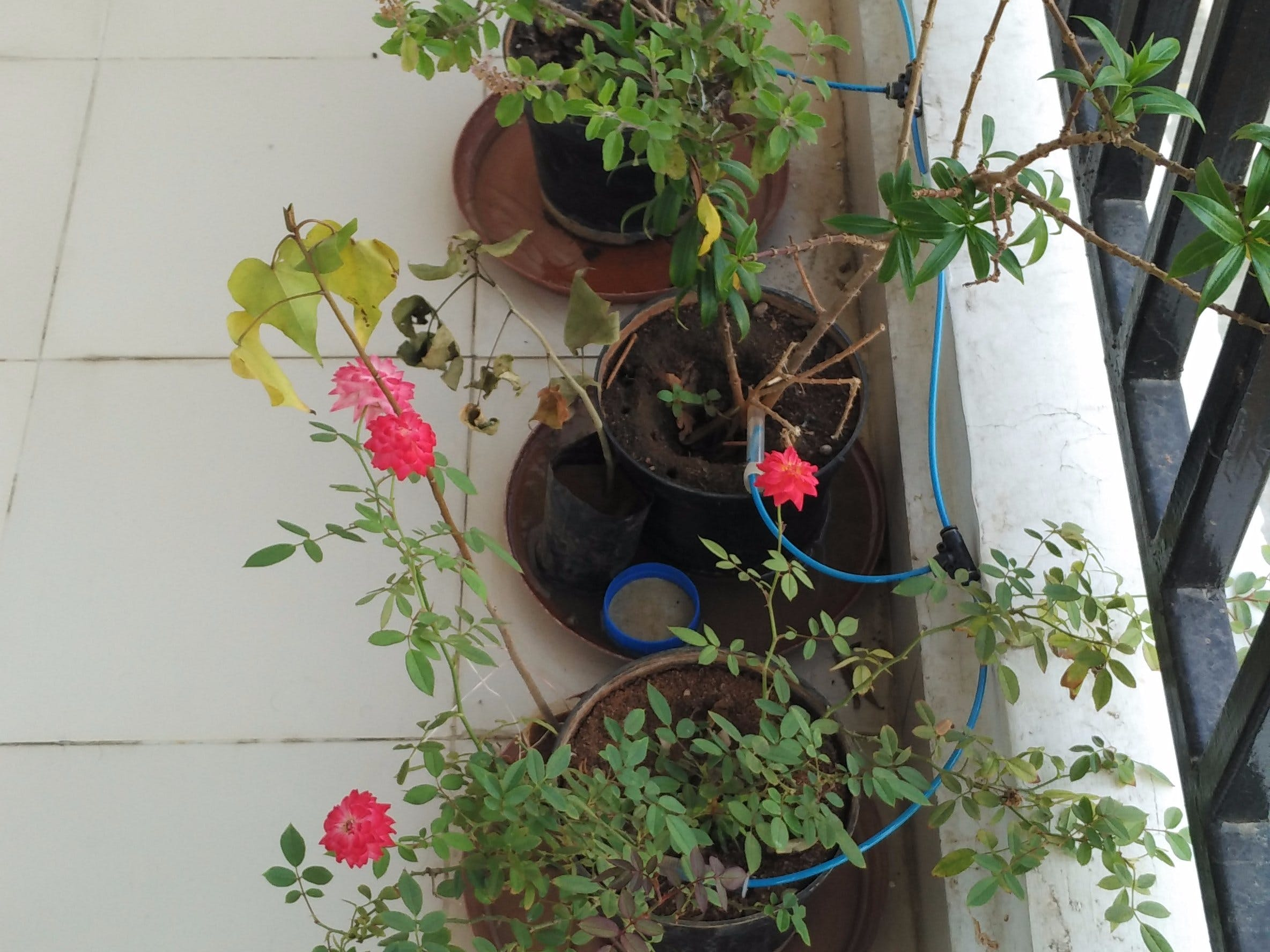 ESP controlled Plant watering system