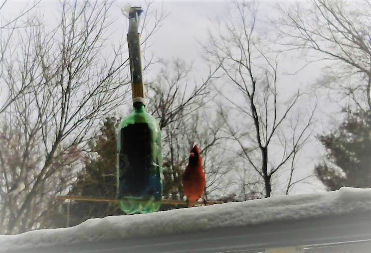 A cardinal enjoying a meal during Stella! Yes the Arduino 101 works in a snow storm!