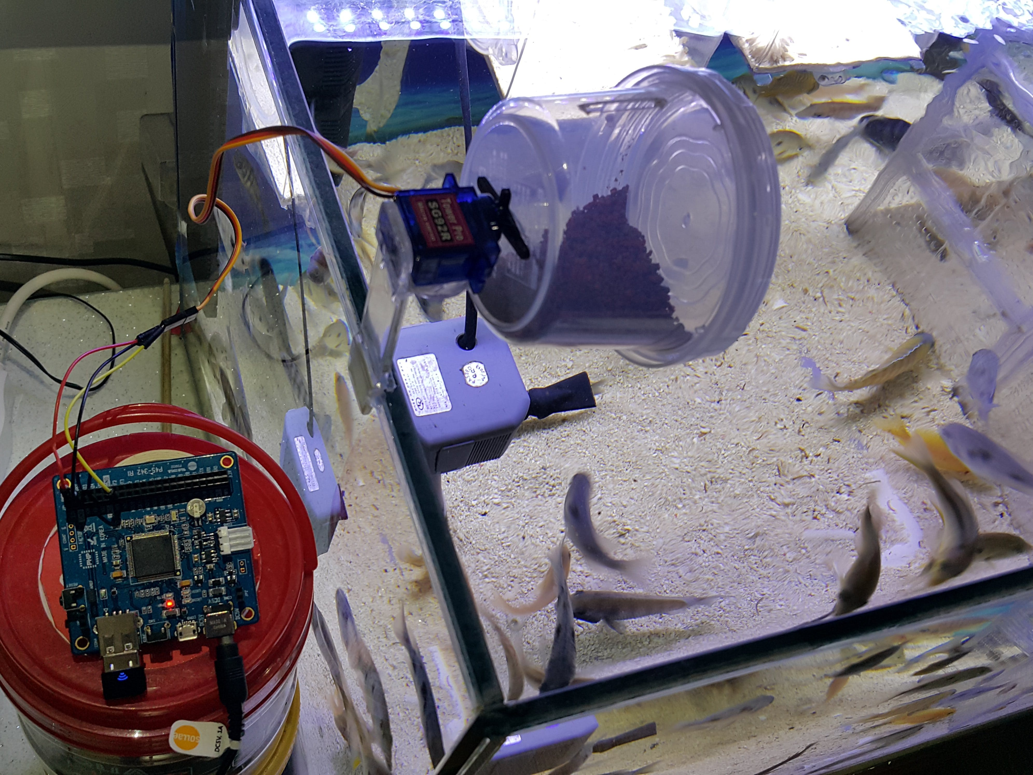 Feeding Fish Remotely by a PHPoC Blue
