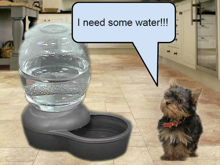 AquaNiner Pet Hydration Monitor