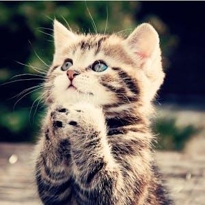 Cute kittie dhstuxjyqv