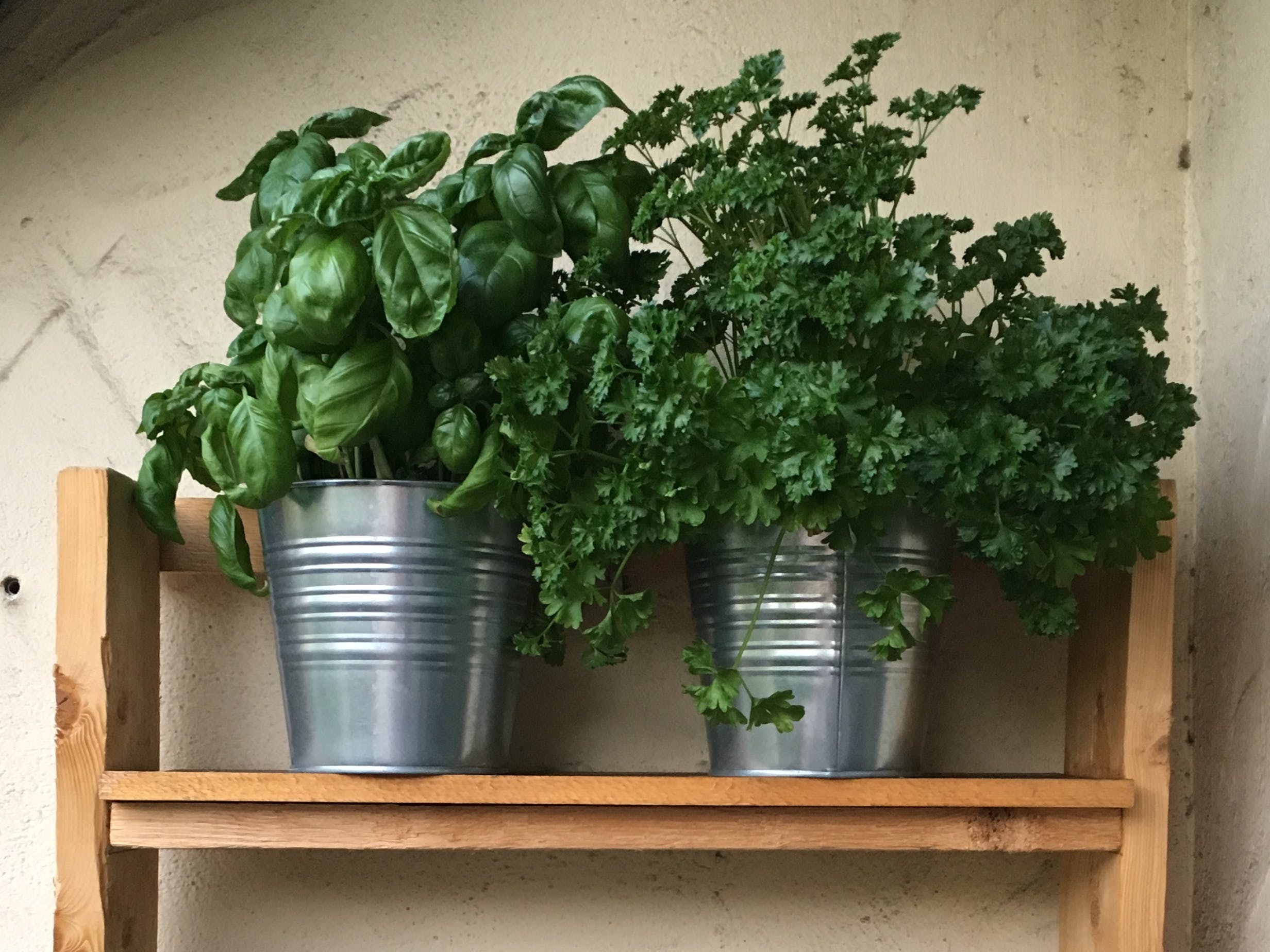Real-Time Clock Controlled Herbal Garden Watering System