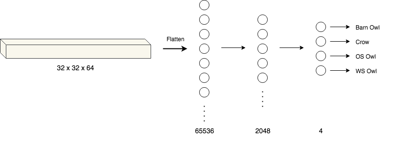 The fully-connected layer. The output of the convolutional layer is flattened and fed in as input.
