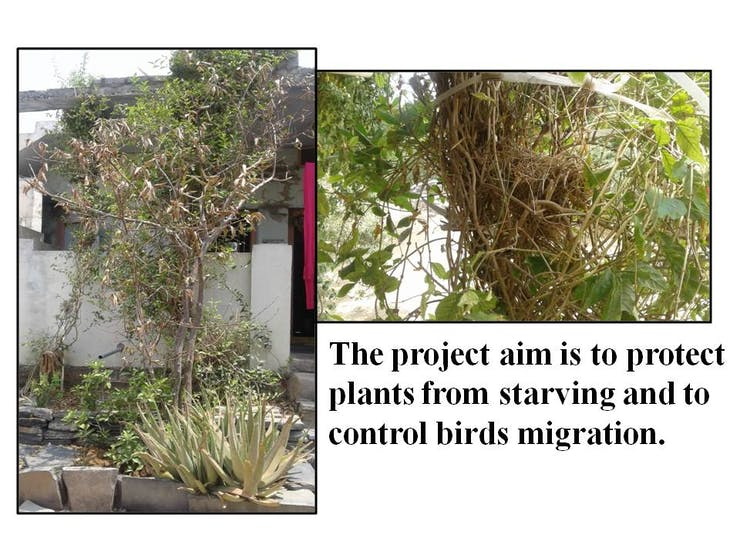 Figure 1: Plant starved due to less water during summer and birds migrated from nest.