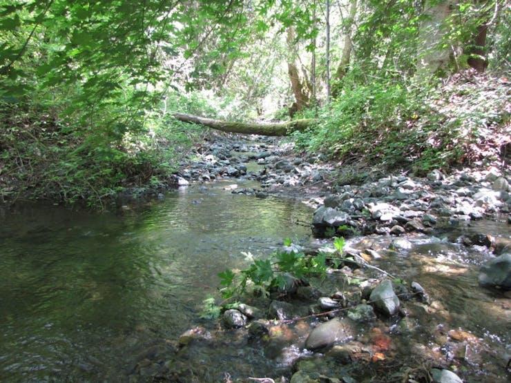 My Local Creek