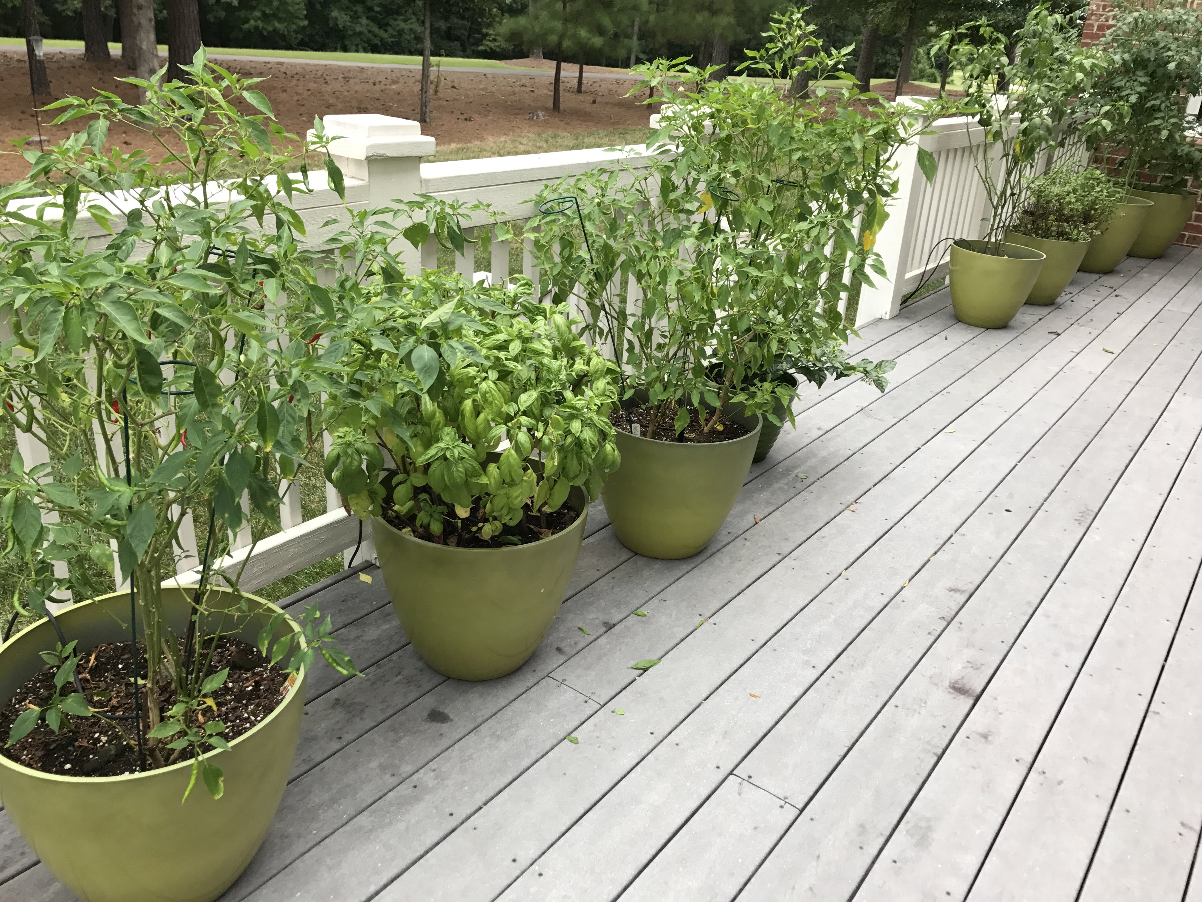 My plants - They have been very good to me this season, this project is the least I can do in return.