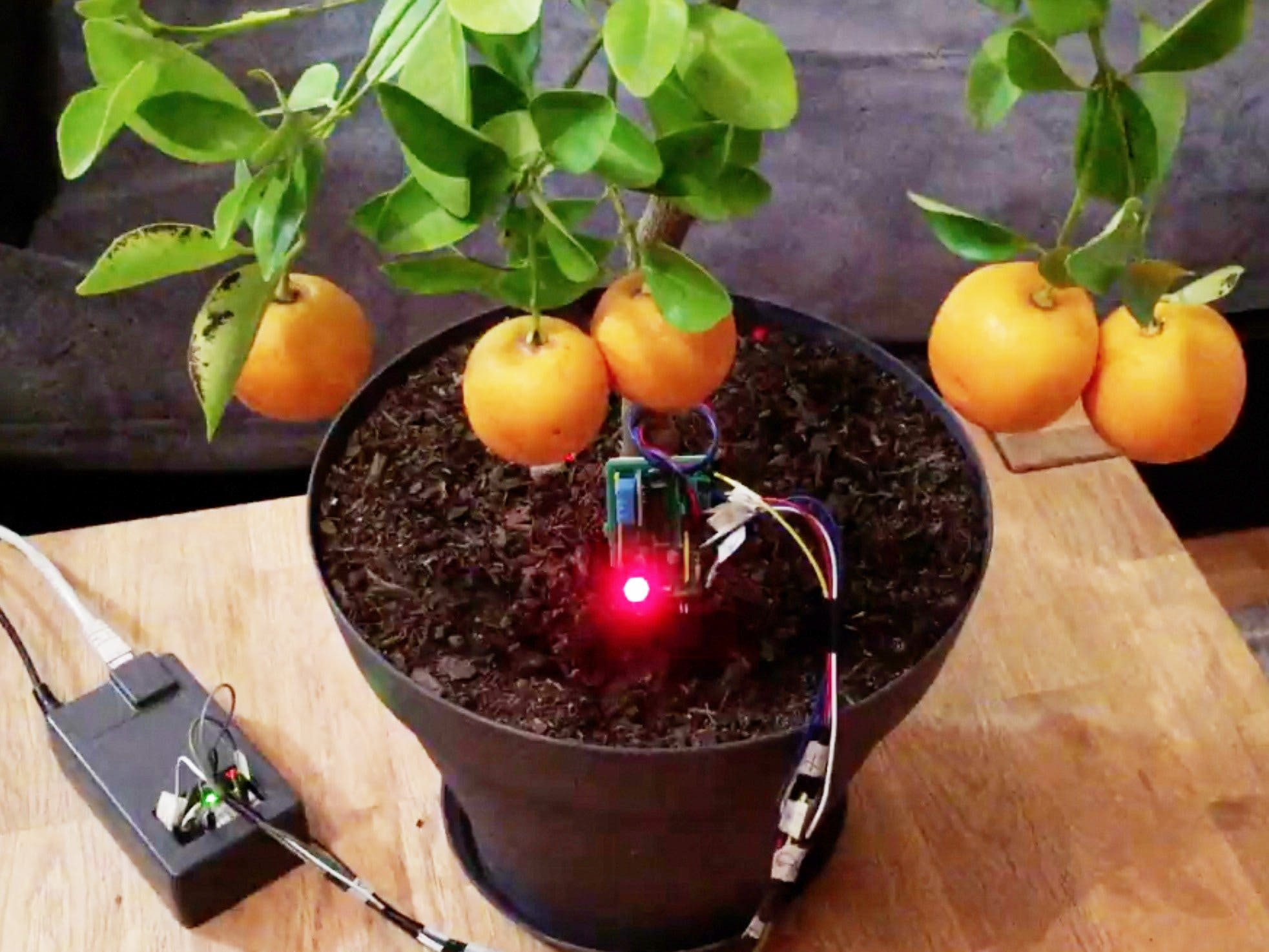 Have a Green Thumb with FlowerDuino