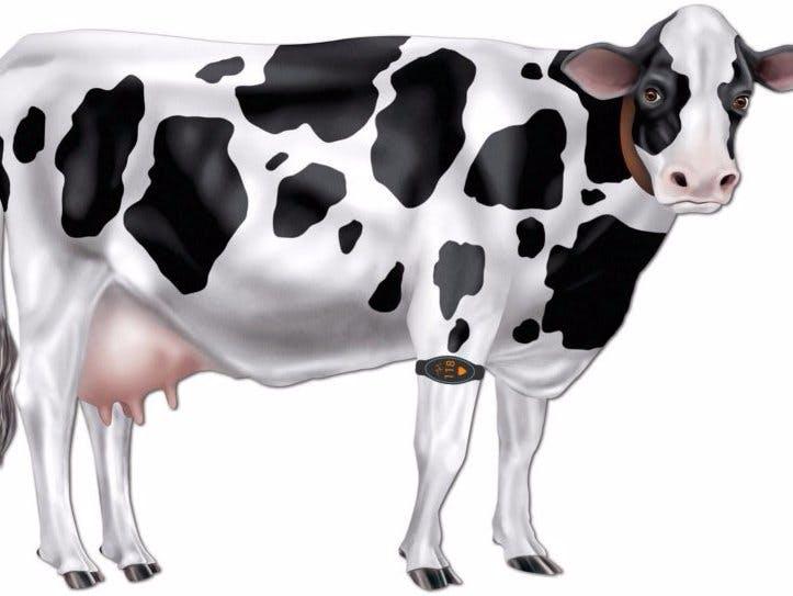 CowBit