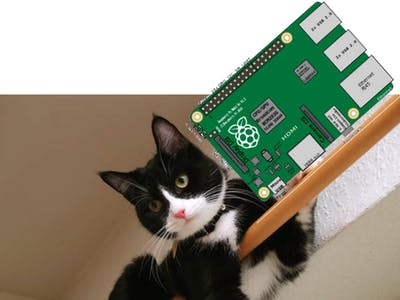 CAT-BOT