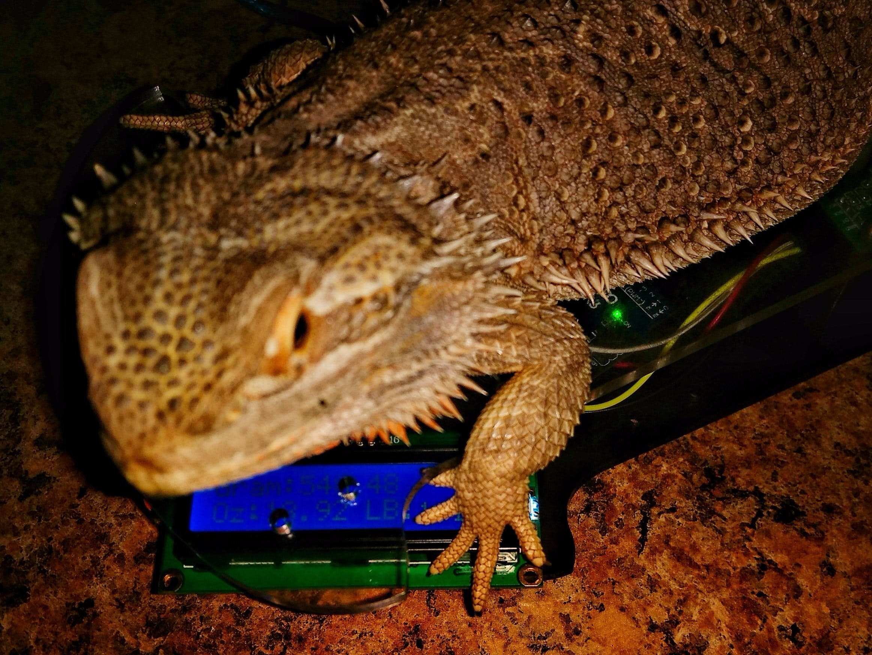 The Dragon Weigher - Arduino Uno Controlled HX711