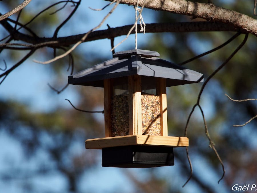 IoT Bird Feeder with Sigfox and Tweeter