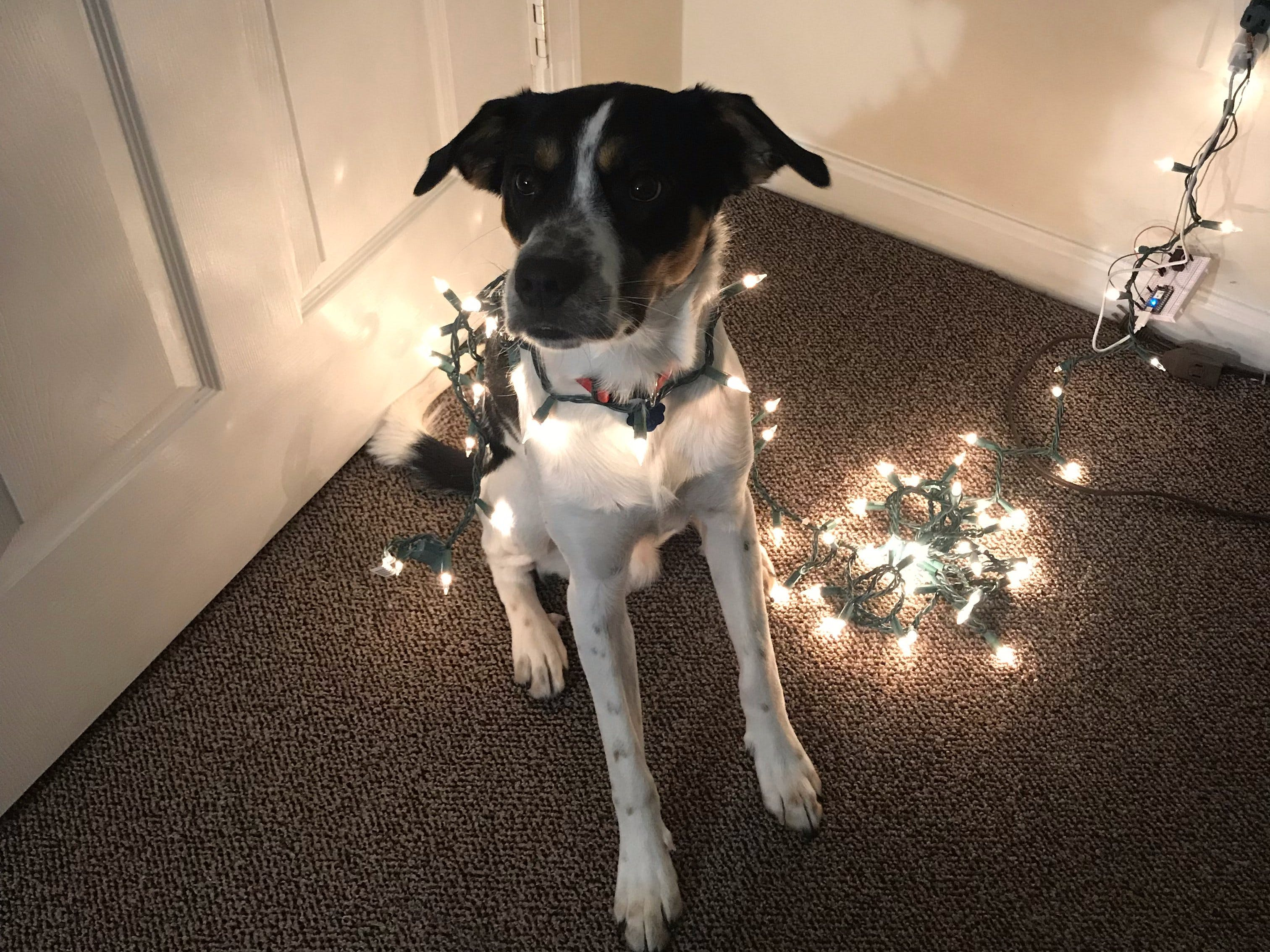 Christmas Lights Energy Savings