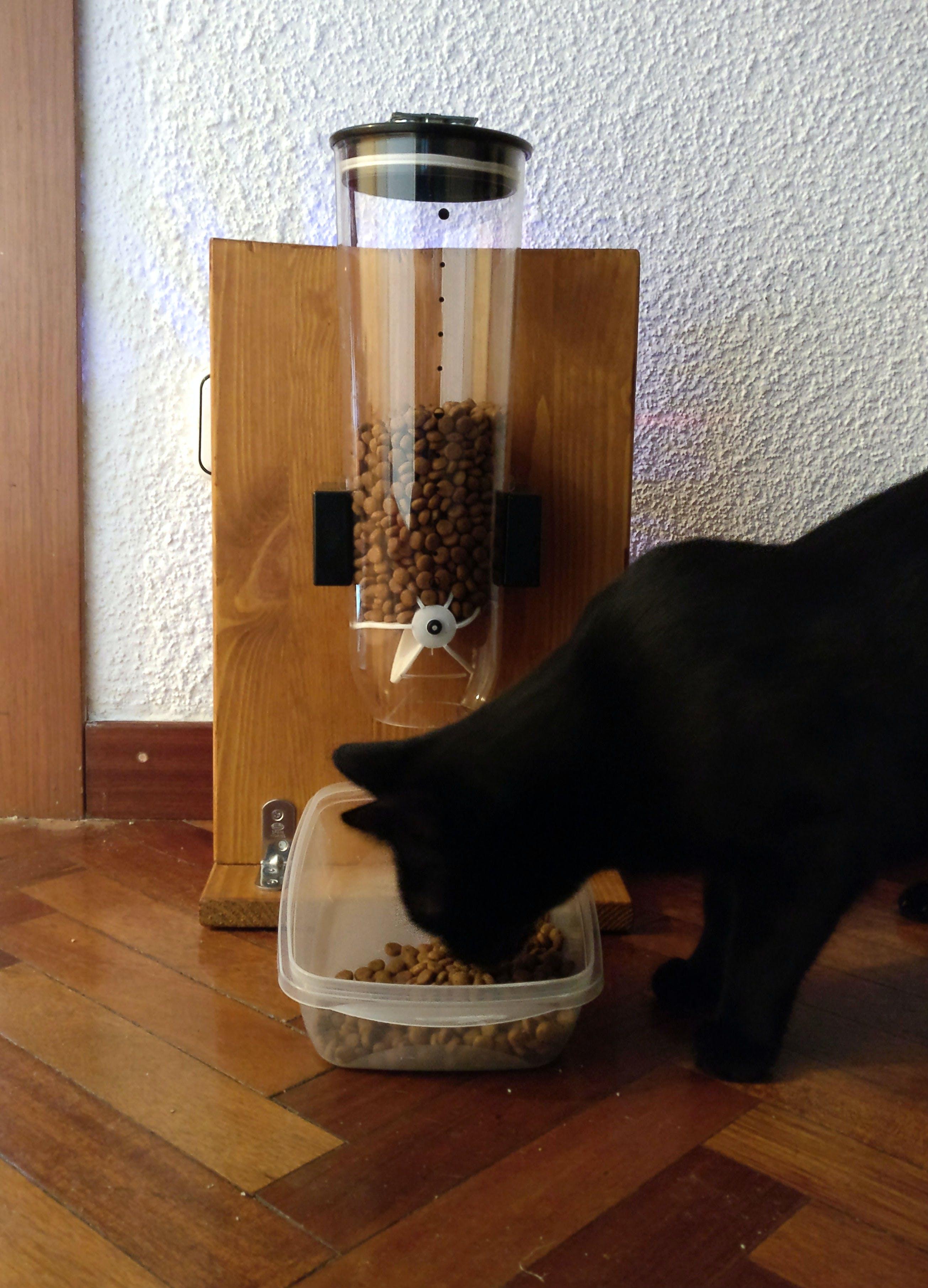 My colleague Bagheera enjoying her brand new catFeeder!