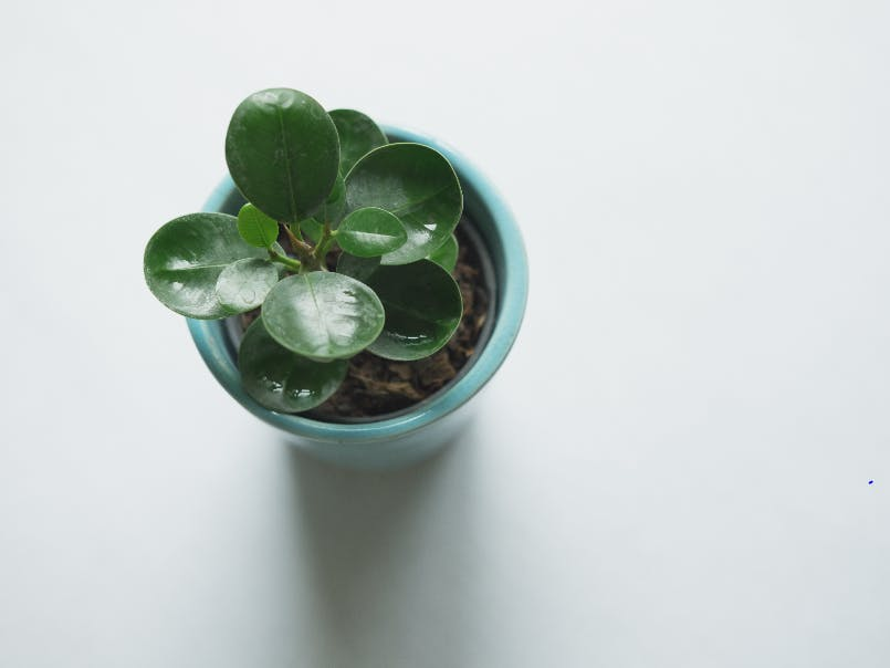 Plant Saver