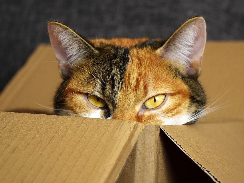 Schrodinger's Cat Detector