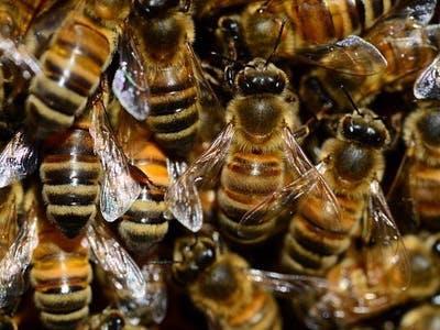 Bee Hive Health Monitor
