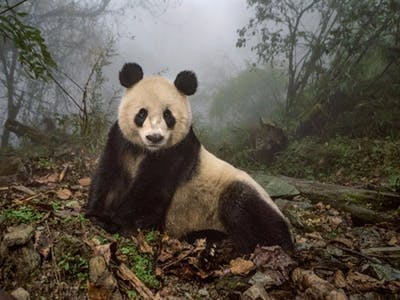 Wild Animal Detecting and Monitoring