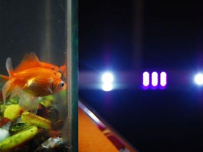 Automated LED Lighting for Planted Aquarium
