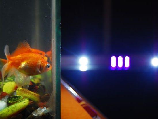 automated led lighting for planted aquarium hackster io